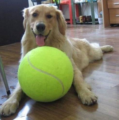 large tennis dog ball