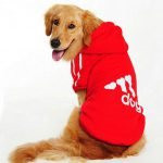 dog clothing aliexpress