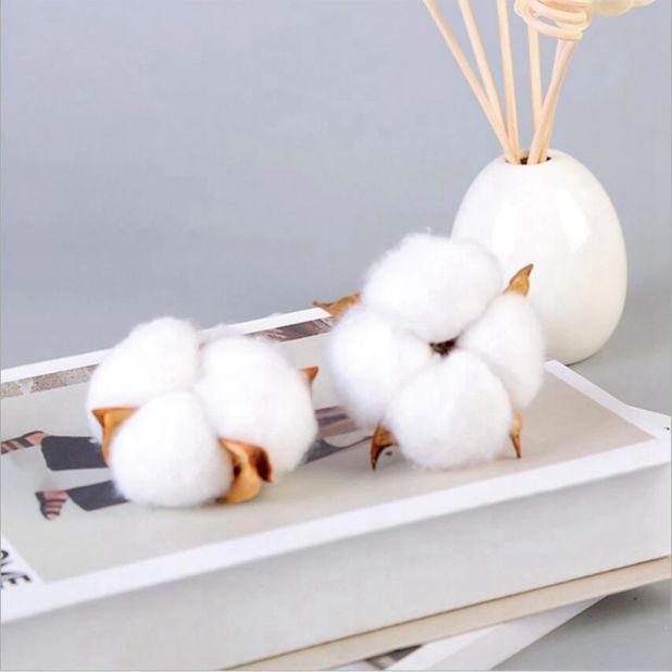 aliexpress dried cotton
