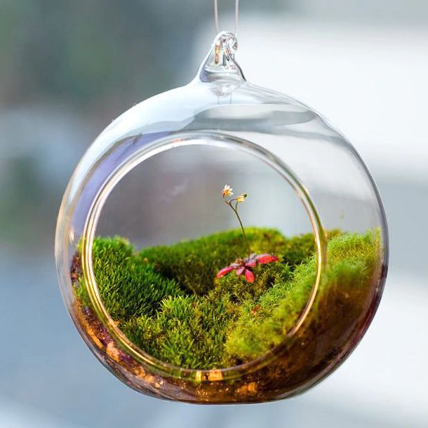 aliexpress glass terrarium