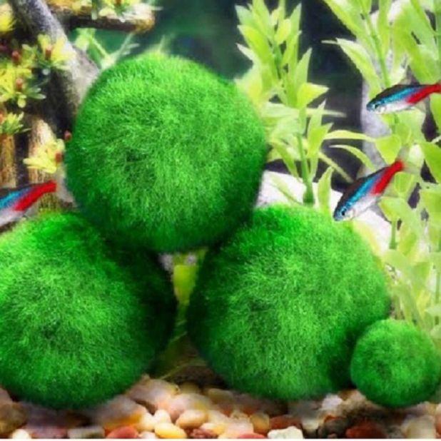 aliexpress Aquarium Moss Ball