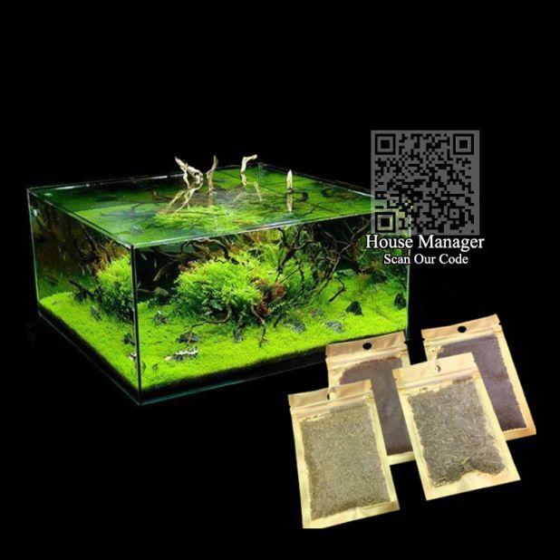 aliexpress seeds of aquatic plants