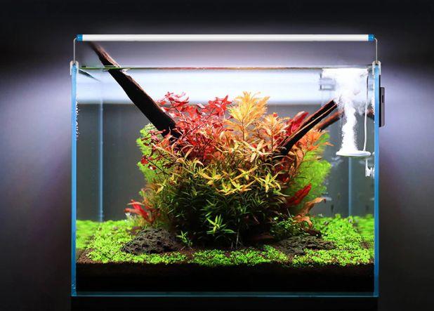 aliexpress lighting for the aquarium