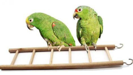 aliexpress ladder for birds