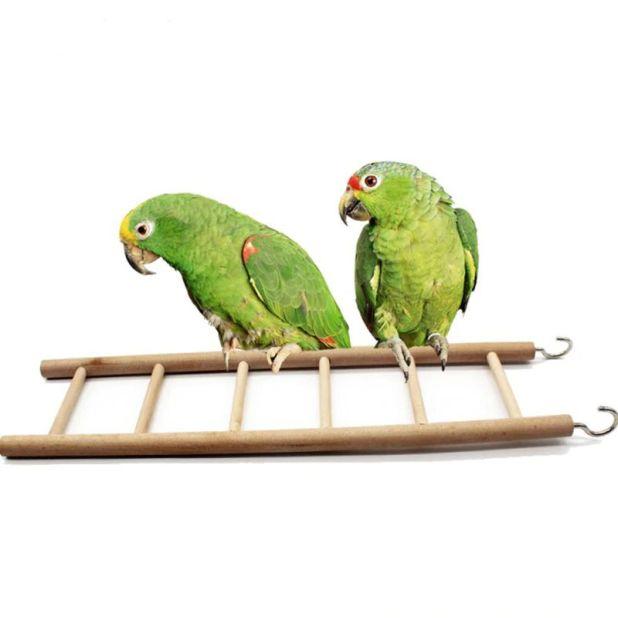 aliexpress ladder for birds